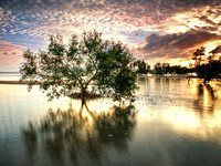 Once Upon a Mangrove