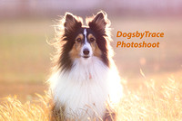 DogsbyTrace Photoshoot Package